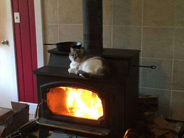 NutBull-cat on stove