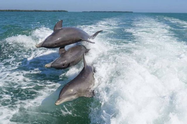 nutbull-dolphins-race