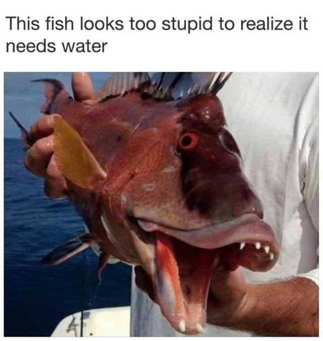 NutBull-Fish looks too stupid