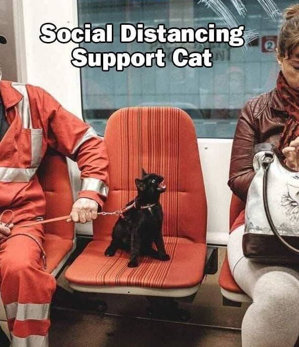 NutBull-social distancing support cat